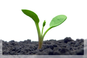 Living-Soils-The-Key-to-Abundant-Plant-Growth-2